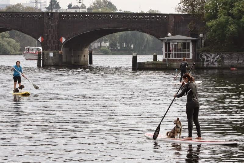 SUP Dog Kurse Stand Up Paddling mit Hund Alster Hamburg III