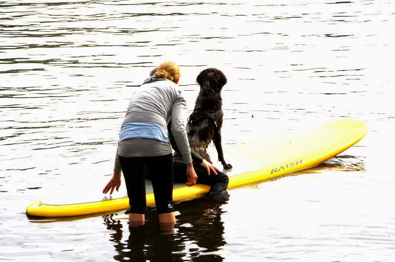 SUP Dog Kurse Stand Up Paddling mit Hund Alster Hamburg II
