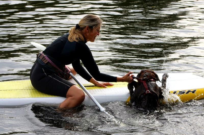 SUP Dog Kurse Stand Up Paddling mit Hund Alster Hamburg V